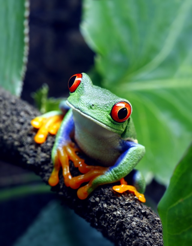 A very colorful little frog