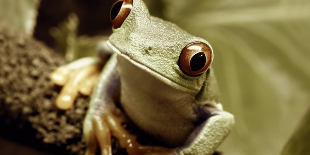 A more subdued, sepia-tone frog